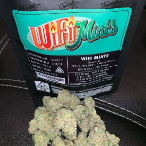 Jungle Boys Wifi Mint